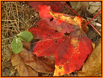 Fall New England Leaves by John W. Uhler © Page Makers, LLC