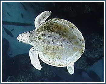 Sea Turtle at the New England Aquarium in Boston © Page Makers, LLC